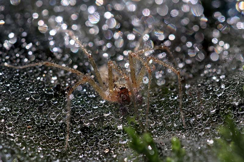 Kele Janos - Spider in droplet suit
